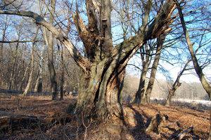 Podpora hnízdění ptactva vlesích