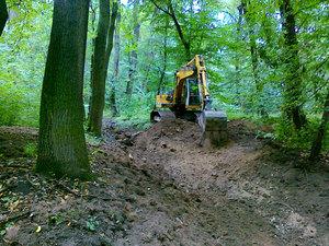 Revitalizace vlužních lesích